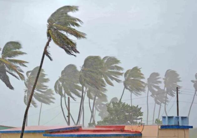 Winds blowing palm trees